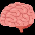前頭葉の働き・機能、鍛える為のゲームや食べ物とは