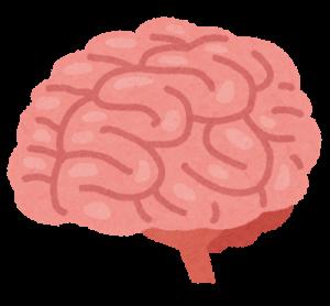 脳はピンクでシワシワ