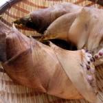 筍はデトックス効果のある食材!選び方、茹で方、調理法の基本